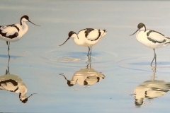 Three Avocets