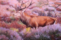 Red stag, Dunwich Heath