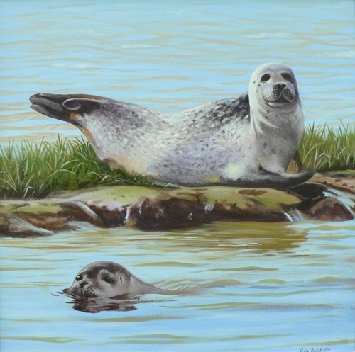 Seals on the Blyth Estuary